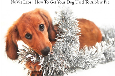 NuVet Labs | How To Get Your Dog Used To A New Pet Infographic