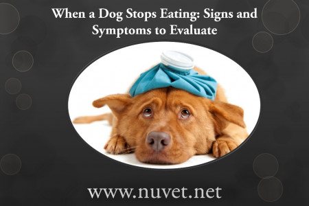 NuVet plus   when a dog stops eating signs and symptoms to evaluate Infographic