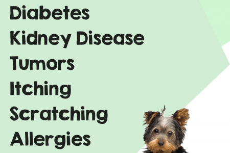NuVet Plus Reviews - Your Pets Best Friend Infographic