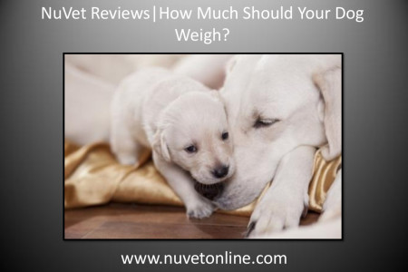 NuVet Reviews   How Much Should Your Dog Weigh?   Infographic