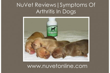 NuVet Reviews   Symptoms Of Arthritis In Dogs Infographic