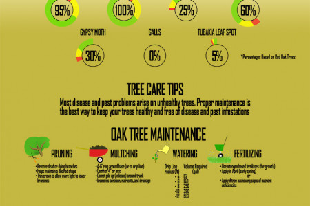 Oak Tree Maintenance Infographic