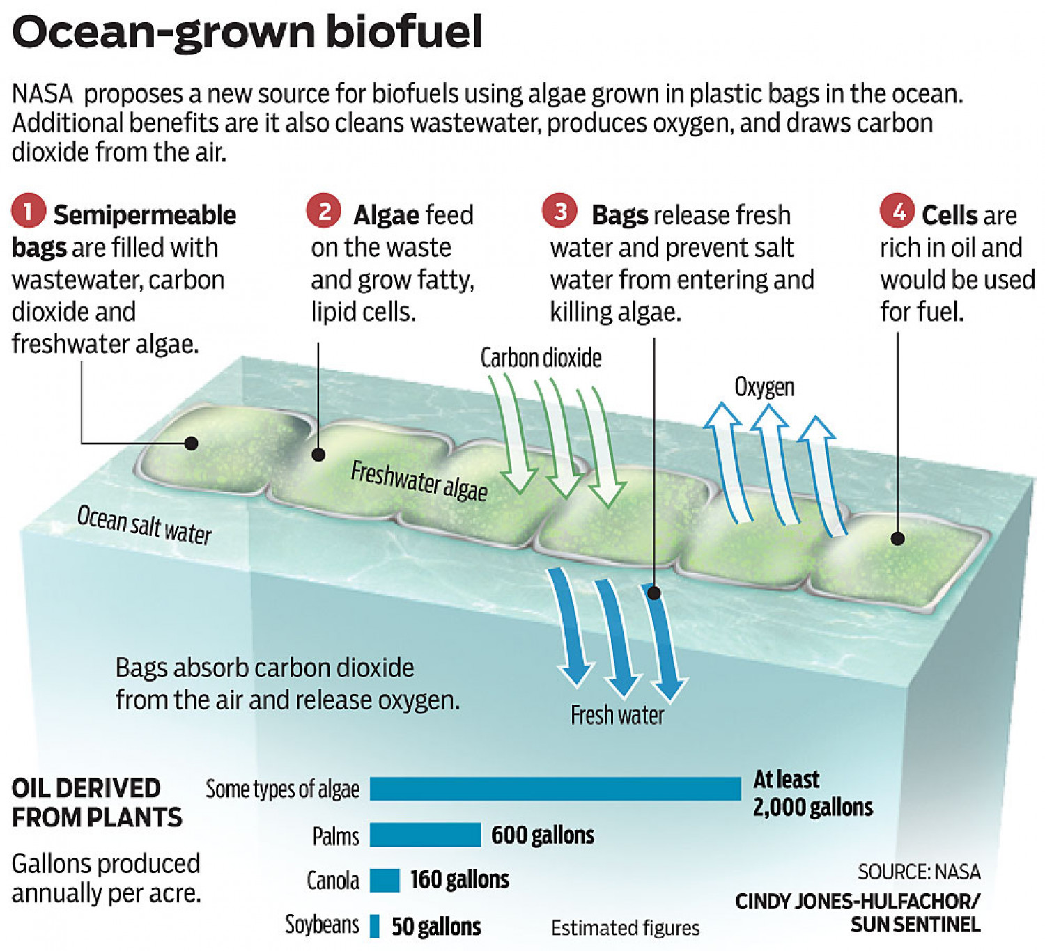 Ocean-grown biofuel Infographic