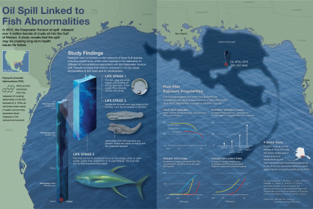 Oil Spill Linked to Fish Abnormalities Infographic