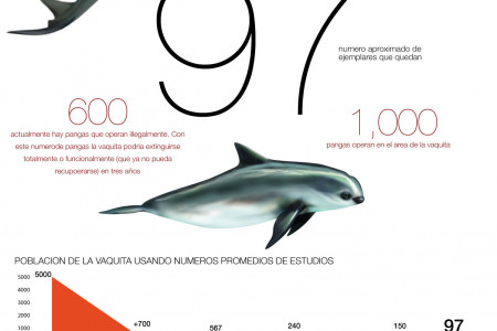 ONLY 97 VAQUITAS LEFT  Infographic