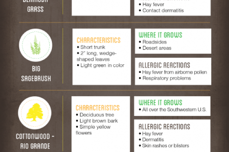 Outdoor Allergy Triggers in Arizona Infographic