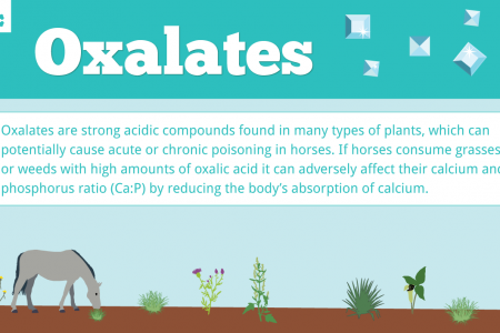 Oxalate Poisoning in Horses Infographic