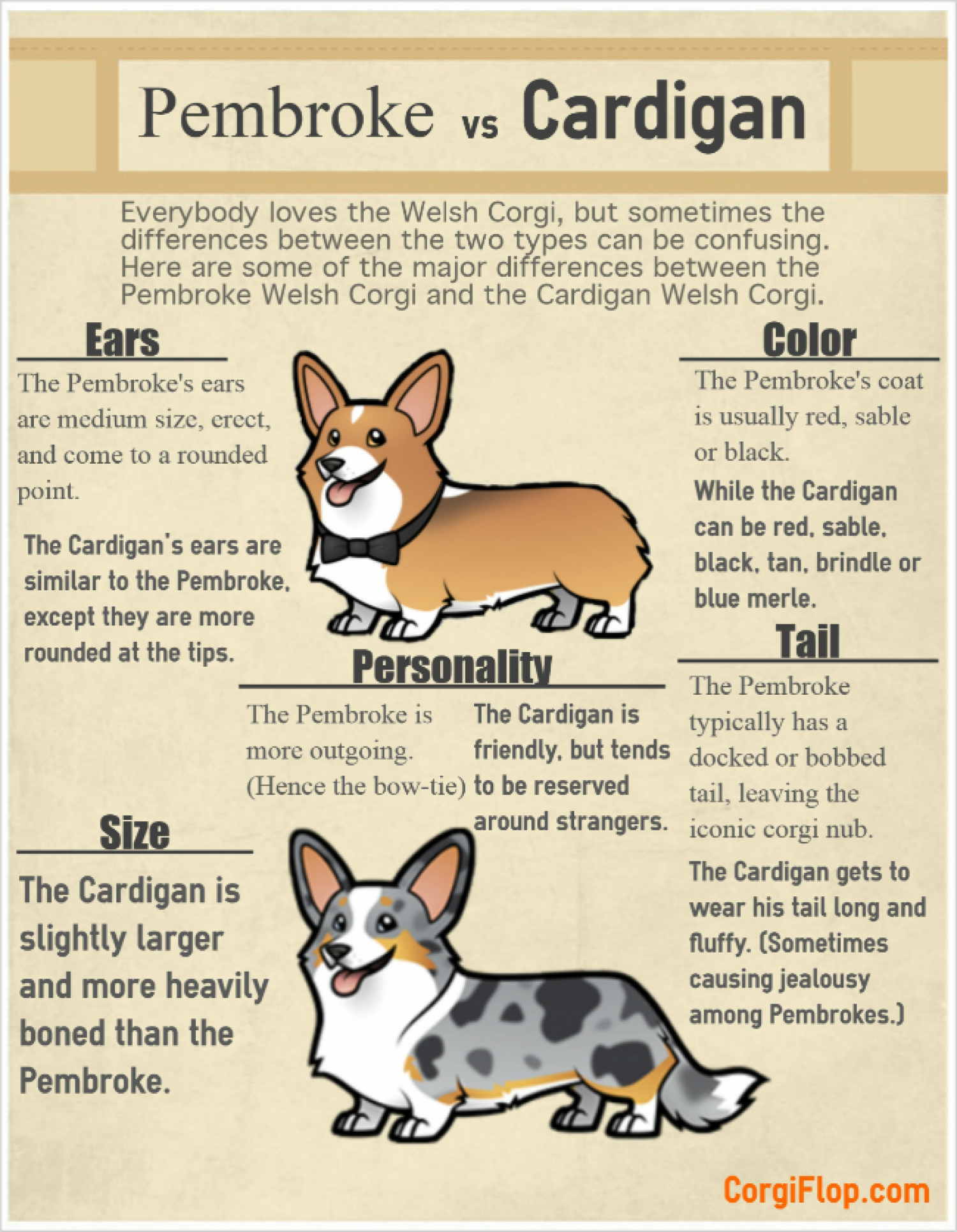 Pembroke vs Cardigan Infographic
