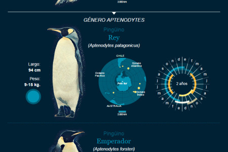 Penguins in Chile | Climate Change Infographic