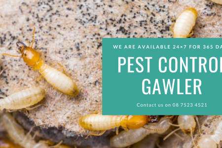 Pest Control Gawler Infographic