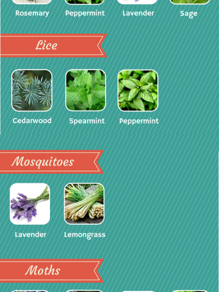 Pest Control with Essential Oils Infographic