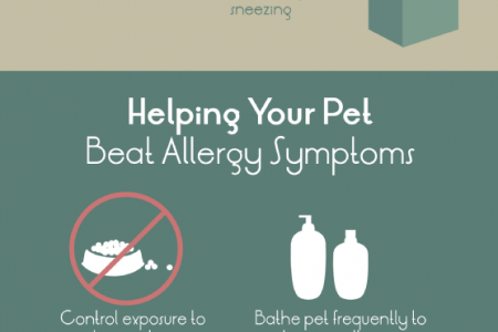 Pet Allergies 101 Infographic