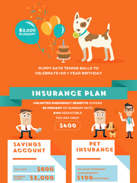 Pet Insurance Infographic Infographic
