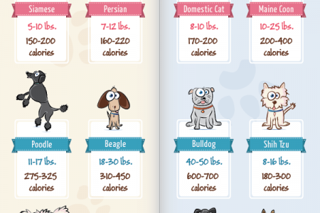 Pet Obesity Infographic