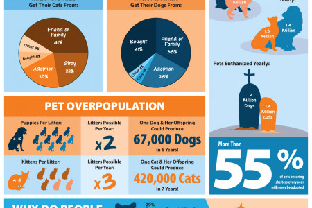 Pet Overpopulation & Shelter Statistics Infographic