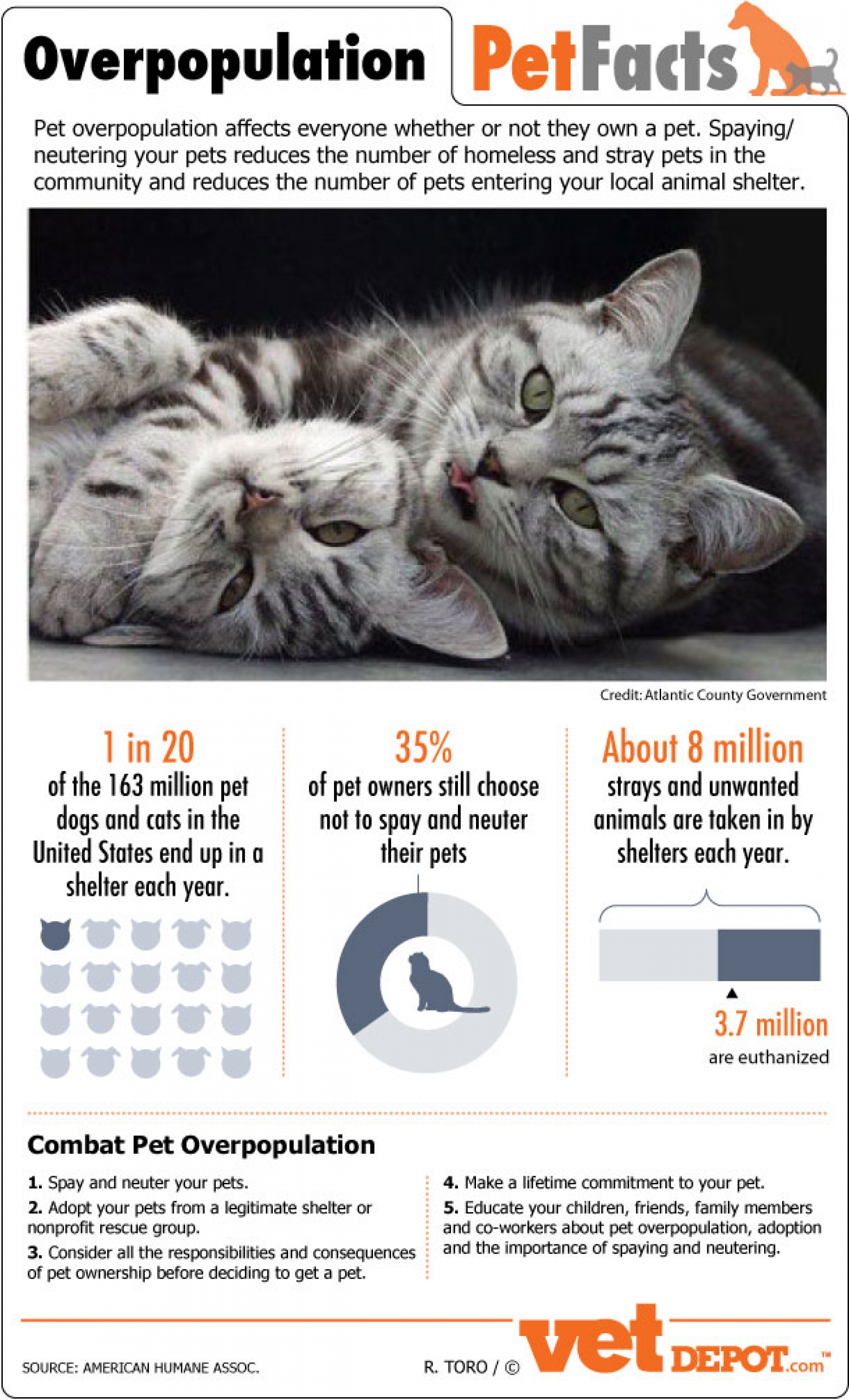 Pet Overpopulation Facts Infographic