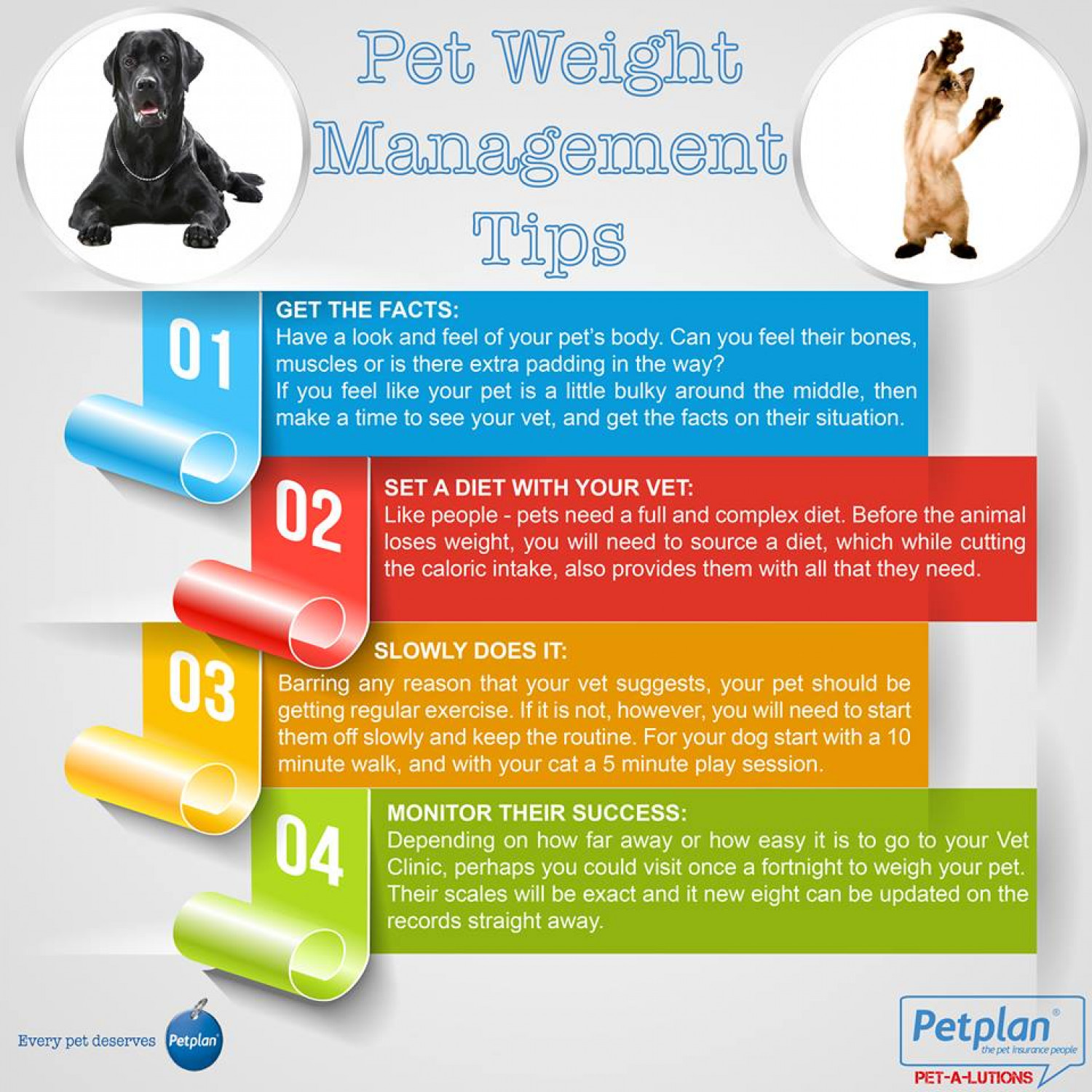 Pet Weight Management Tips Infographic