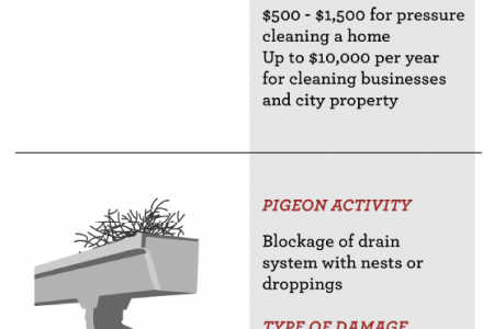 Pigeon Problem Infographic