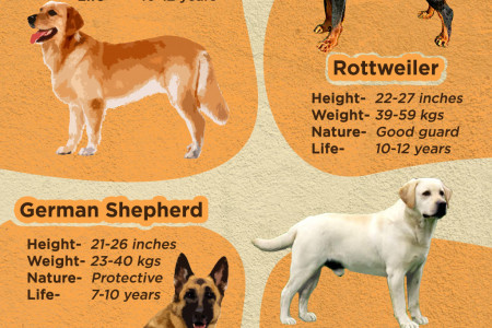 Popular Dog Breeds Infographic