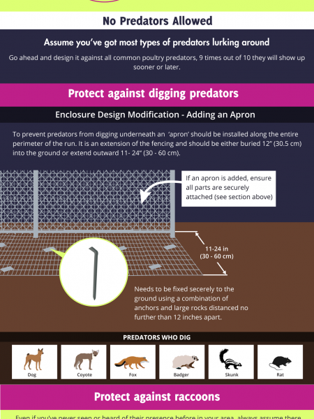PoultryDVM Infographic: Tips for Protecting Flocks from Predators Infographic