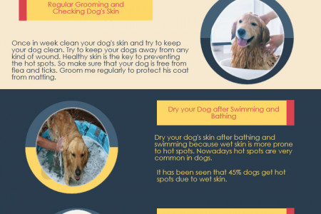 Preventing Hot Spots in Dogs Infographic