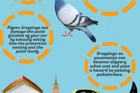 Problems with pigeons Infographic
