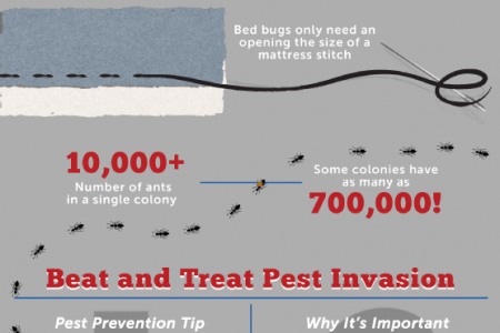 Protect Your Home From Pest Invasion Infographic