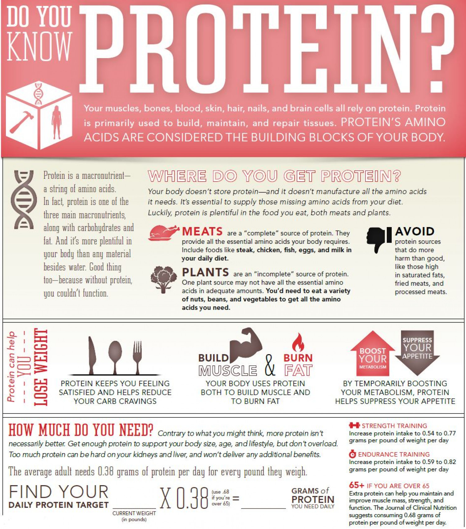 Protein, The Building Blocks Of Your Body Infographic