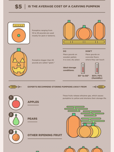 Pumpkin Facts Infographic
