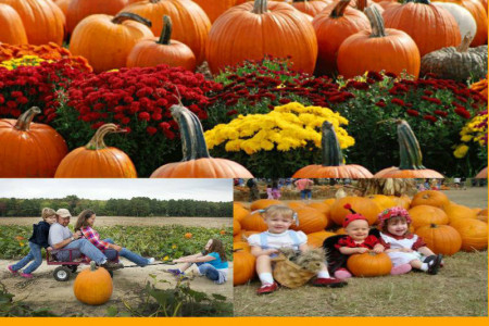 Pumpkin Farms Hamilton, Ontario – Merry Farms Infographic