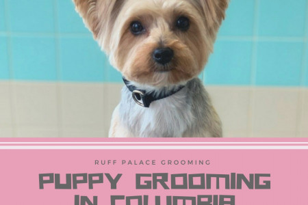 Puppy Grooming in Columbia Infographic