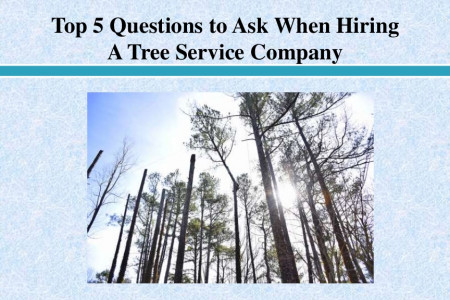 Questions to Ask When Hiring A Tree Service Company Infographic