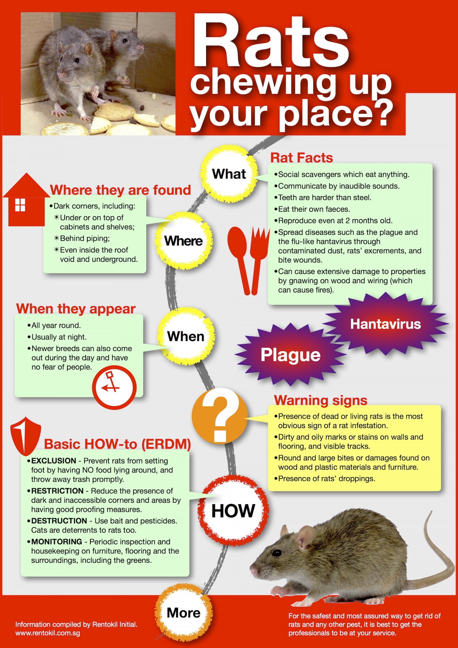 Rats chewing up your place? Infographic