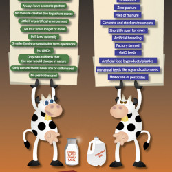 a comparison between raw and pasteurized cow milk Those favoring the consumption of raw milk  research shows only very slight  differences in the nutritional values of pasteurized and  exposure to cows and  straw as well as raw milk were.