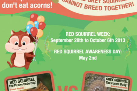 Red Squirrels in a Nut Shell Infographic