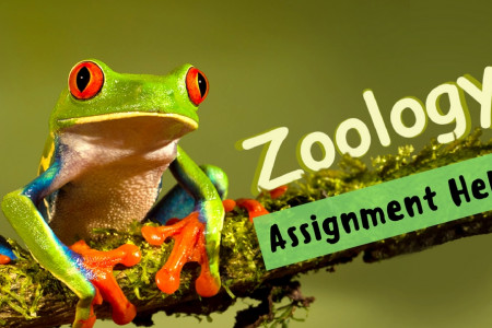 Reliable Zoology Assignment Writing Help Services from Us Infographic