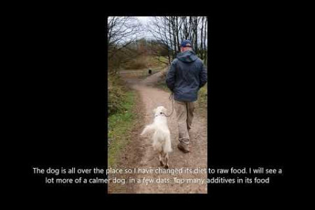 Residential Training for a Golden Retriever | Peter Hargreaves Dog Trainer Infographic
