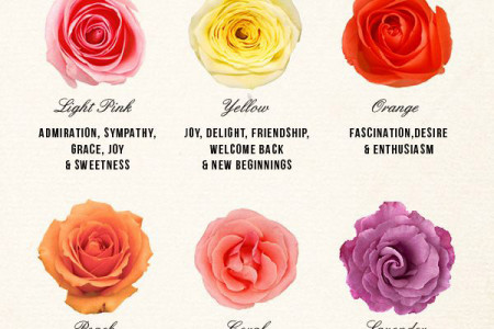 Roses Guide - Roses Meaning Infographic