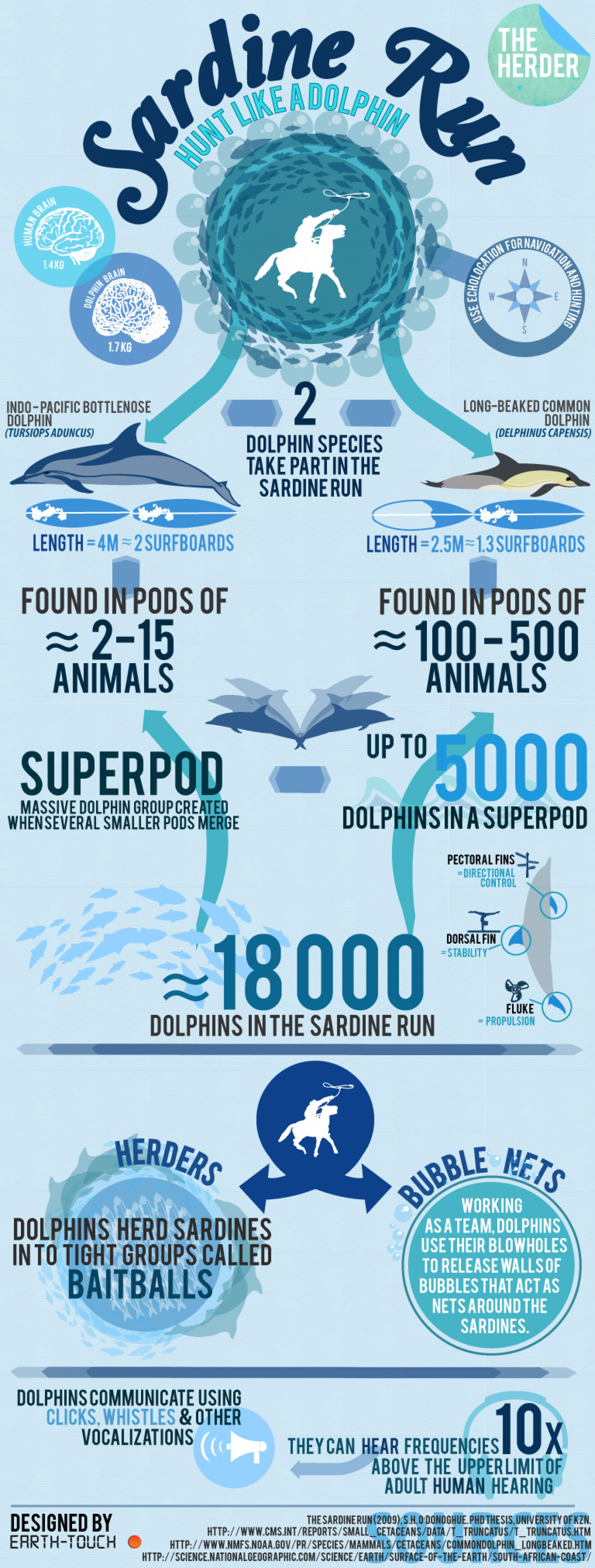 Sardine Run: The multi-talented dolphin Infographic