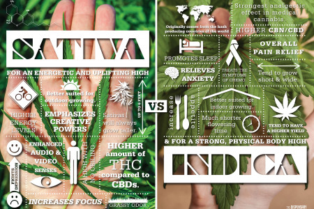 SATIVA vs INDICA: How Will You Medicate? Infographic