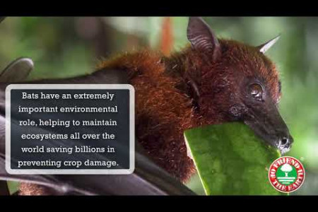 Save Bats with Friend of the Earth Infographic