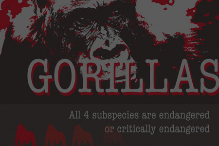 Save the Gorillas Infographic Infographic