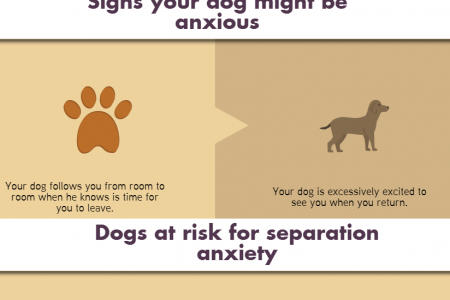 Separation anxiety. How to help a dog with separation anxiety? Infographic