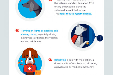 Service Dogs: Helping Those Who Served Our Country Infographic