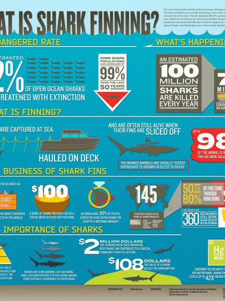 Shark Finning Infographic