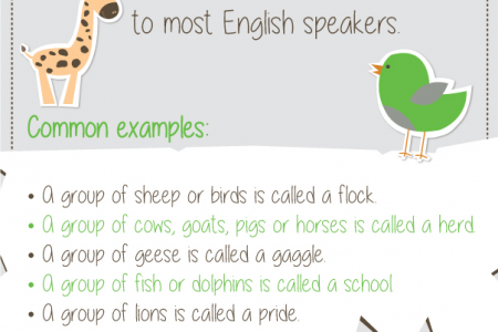 Shenker English Tips - Collective Nouns Infographic