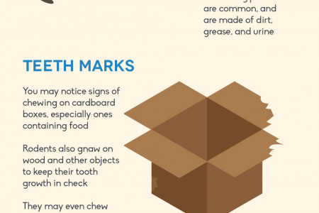 Signs of Rodents in Your Home Infographic