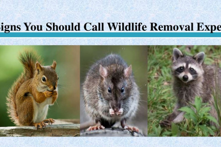 Signs You Should Call Wildlife Removal Experts Infographic
