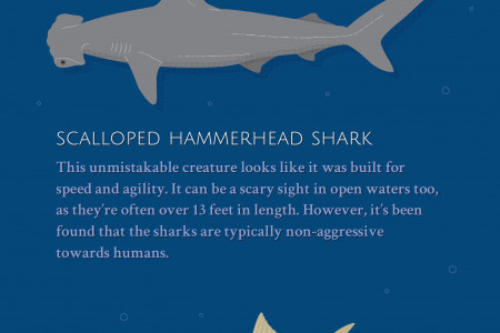 Sizing Up the Fish You'll See at the Monterey Bay Aquarium Infographic