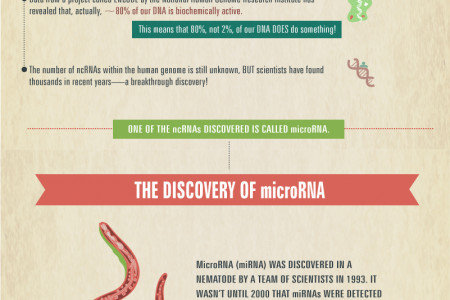 Small Molecule, Big Impact: Exploring MicroRNA Infographic